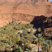 Oasis de palmiers